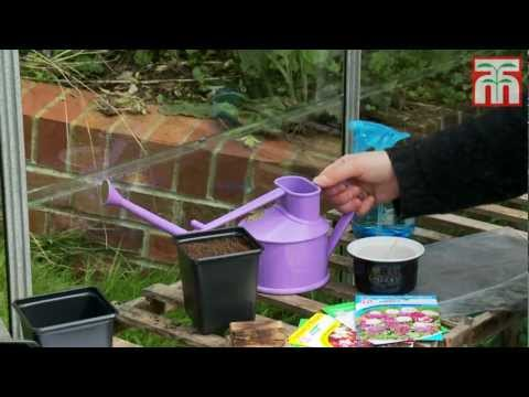 How to sow small seeds video with Thompson & Morgan