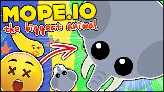 BRAND NEW IO GAME ⭐ BECOMING THE BIGGEST ANIMAL EVER!!   MOPE.IO FUNNY MOMENTS