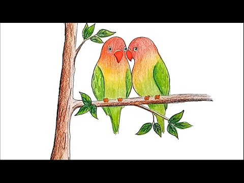 How To Draw Two Parrots On A Branch Of Tree Step By Step