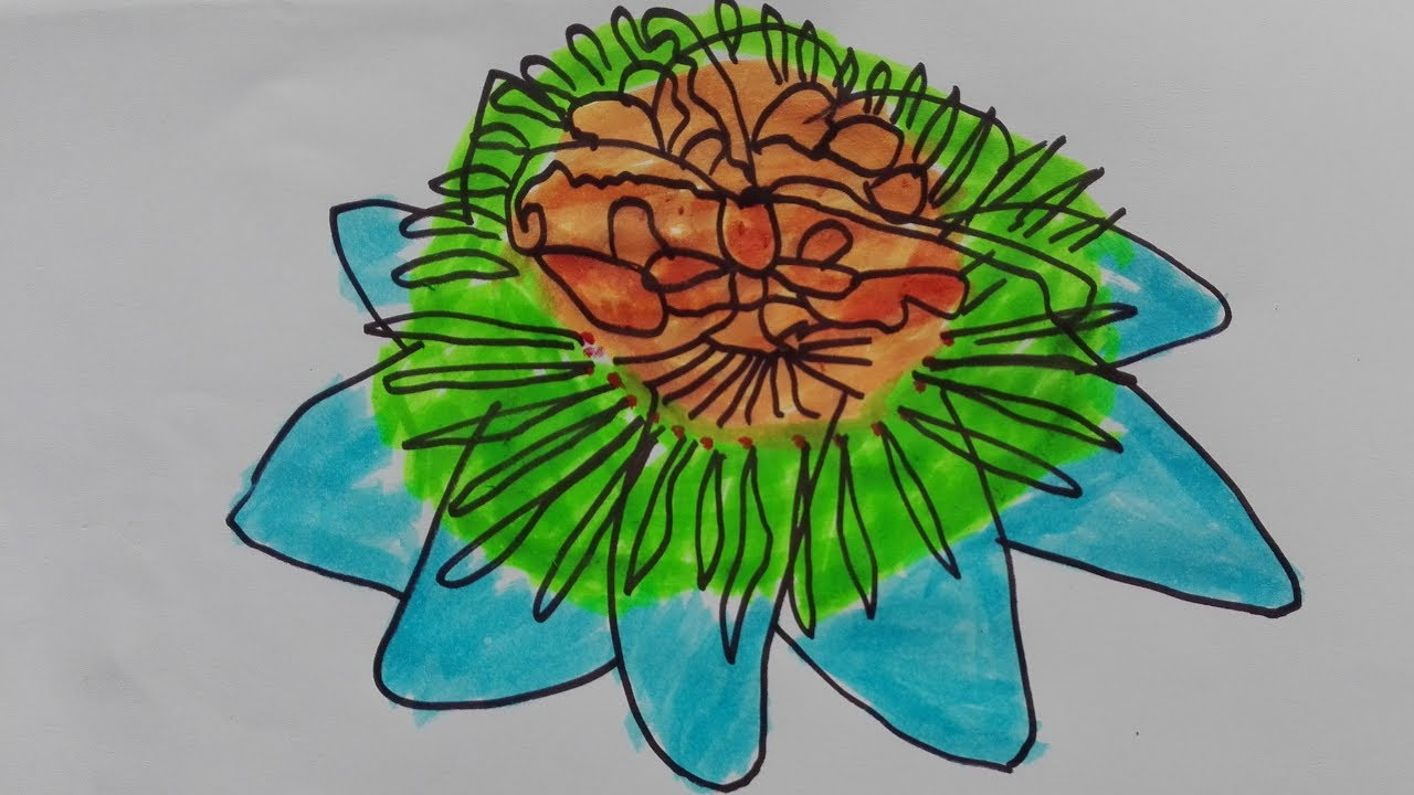 How To Draw A Lotus Flower Lotus Flower Drawing Images Lotus Flower