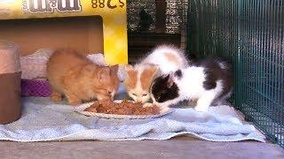 It's Raining Kittens! thumbnail