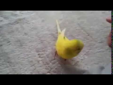 Love has no limits || bird get sad after the death of his friend :(