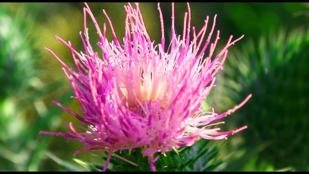 Beautiful Images Of Flowers Hd Flower Slideshow Flowers And
