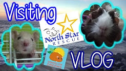 VLOG:  Visiting North Star Small Animal Rescue!