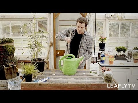 Homegrown Episode 2 - Tips for Growing Healthy Cannabis Plants