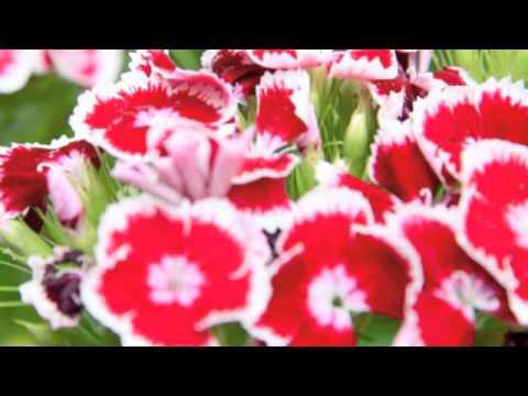 Sakura Arr Barlow Bradford Youtube