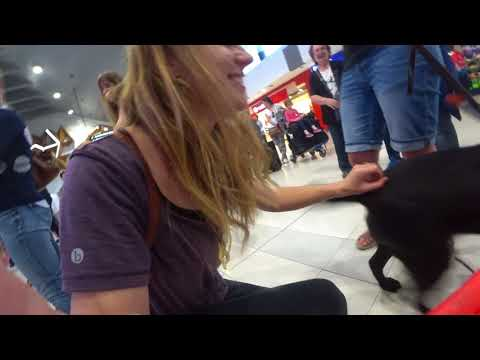 Airport Arrivals, Perth greeting by Guide dogs and friends