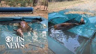 """Horse found """"shivering uncontrollably"""" after hiding in pool to survive California wildfires"""