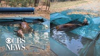 Horse found