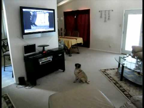 Dog Watching SPDR Commercial
