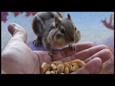 Friendly Birds, Chipmunks and Squirrels