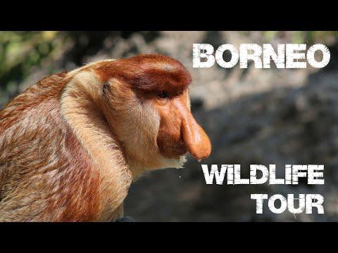 Borneo - Wildlife Tour