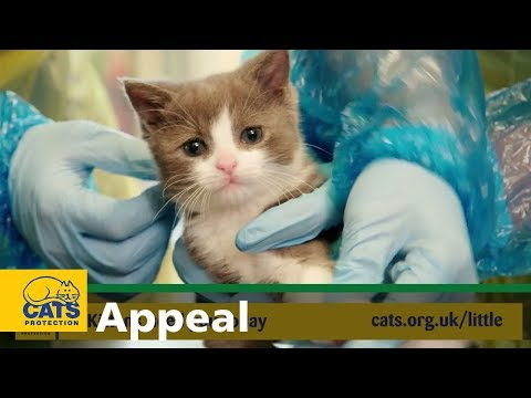 Be there to care for kittens in need - Cats Protection Little Appeal