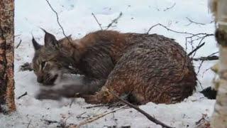 Люди спасают попавших в беду диких животных