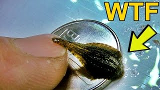 LIPITOARE PITICA SAU CE WTF IS THIS DAILY VLOG - SMALL LEECH OR WHAT