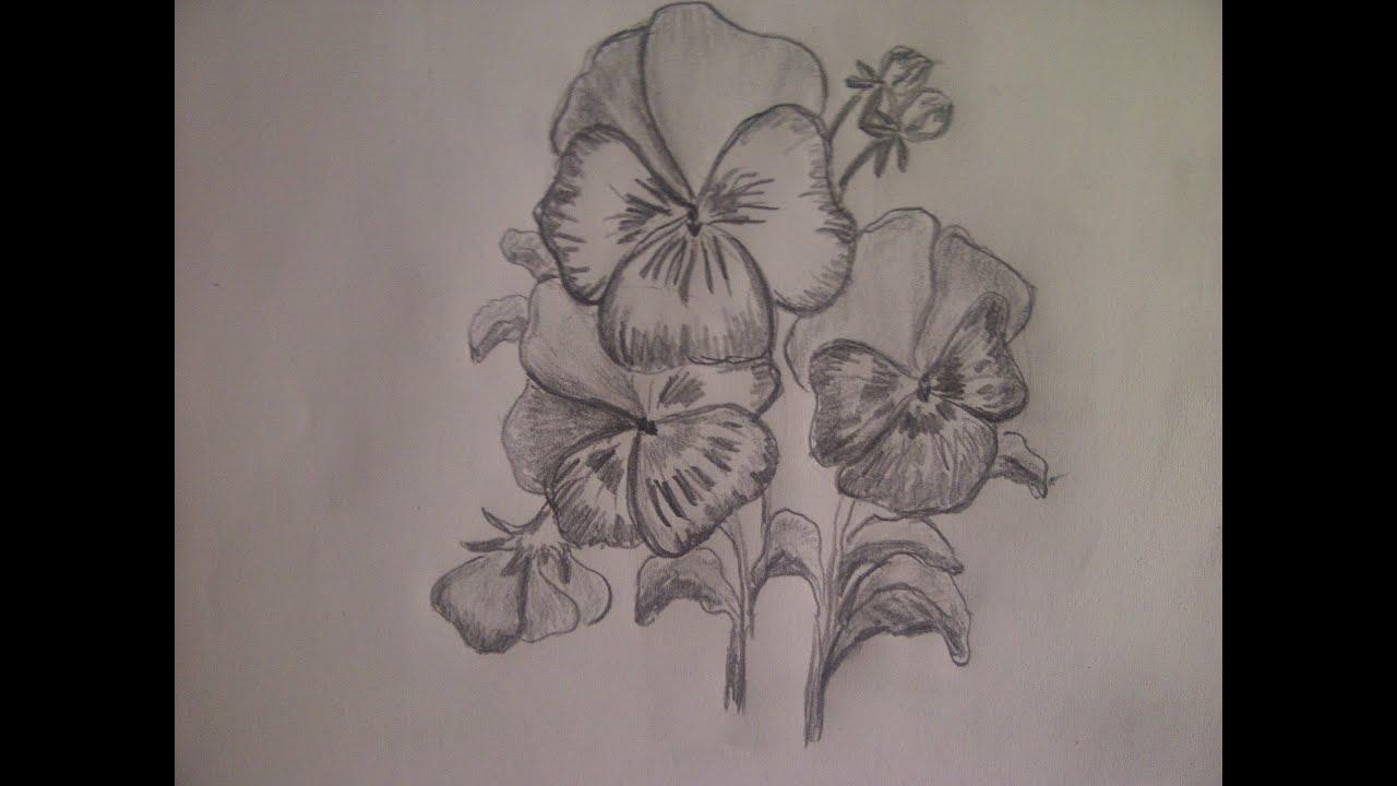 Como Dibujar Flores. Como Dibujar Amor-perfeito. Un Dibujo