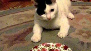 МАМА.МАМА - А котик уже офигел