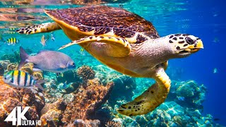 3 HRS of 4K Turtle Paradise  Undersea Nature Relaxation Film + Piano Music by Relaxing The Soul
