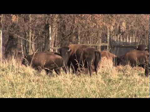 Tour of Wildlife Prairie State Park in Central Illinois