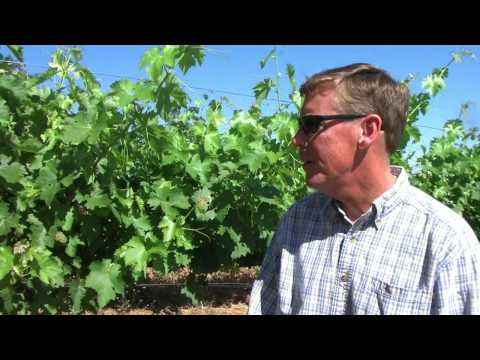 Lake County Winegrape Growers - Regional Profile: Red Hills AVA - Part 1