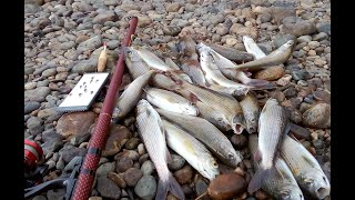 Попал в МУХУ быстро натаскал рыбы Рыбалка на поплавочную удочку