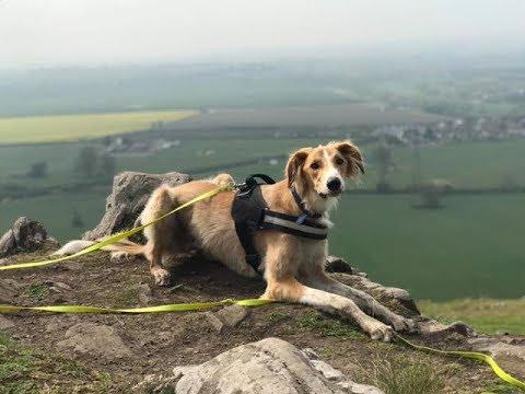 Casper - 1 Year Old Lurcher - 3 Weeks Residential Dog Training