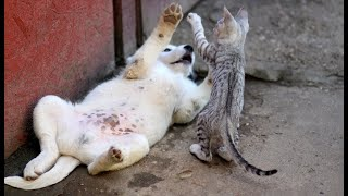 Try Not To Laugh or Grin While Watching Funny Animals Compilation