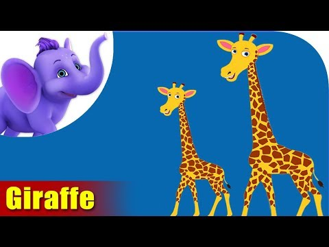 Giraffe Rhymes, Giraffe Animal Rhymes Videos for Children