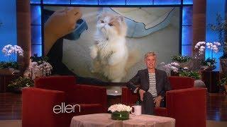 Ellen's Cat Week Wish Comes True! on Ellen show