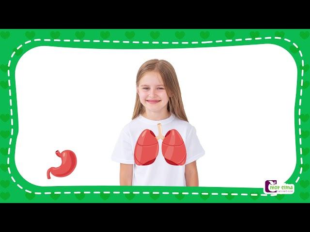 İç Organlarımı Tanıyorum - Okul Öncesi Eğitim