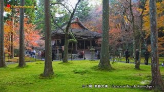 京都 三千院の紅葉 Sanzen-in Temple Kyoto Japan 【HD】癒し 日本の風景 Scenery of Japan Autumn foliage Travel Guide