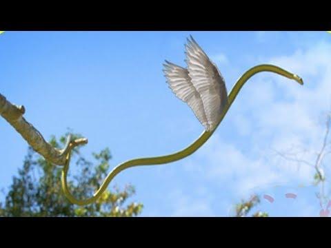 Benarkah hewan ini bisa terbang