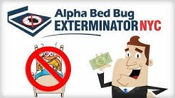 Bed Bugs NYC Removal! Best Bed Bug Exterminator NYC