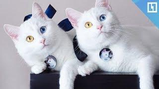 Самые знаменитые кошки-близняшки