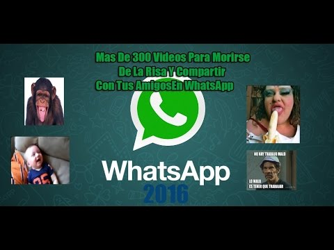 Descargar Mas De 300 Videos Graciosos Para Whatsapp 2016 MEGA
