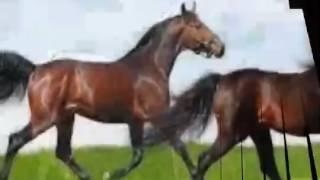 Моя любовь-лошади.