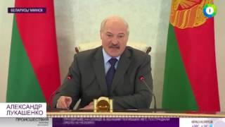 Бесхозяйственность хуже дождей  Лукашенко оценил уборочную   МИР24