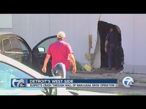 Crash leads to pot growing operation in Detroit