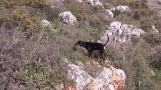 Κυνηγι Λαγου - Rabbit Hunting