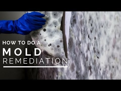 How To Do a Mold Remediation In Your Home