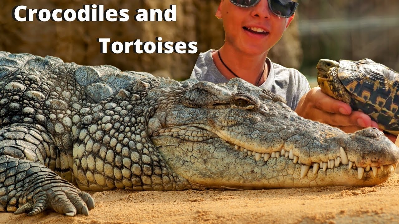 Just A Guy Finding WILD Crocodiles and Tortoises!!