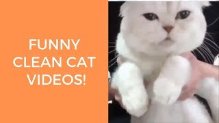 Funny cat videos that will make you laugh so hard you cry clean