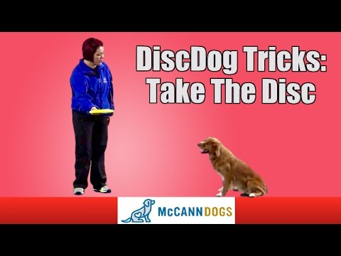 "Disc Dog Frisbee Tricks: Teach Your Dog To ""Take"" The Frisbee"