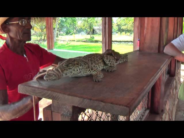 Ferme aux crocodiles dans le Parc National de Ciénaga de Zapata (Baie des Cochons) Cuba