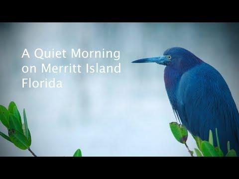 A Quiet Morning on Merritt Island, Florida