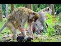 My tear is down after I watch Mum throw baby a way/Dolly no heart to help Youlike Monkey 2074