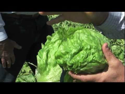 Salinas Agricultural Tour