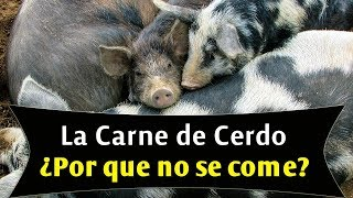 La carne de cerdo, ¿por qué no se come?