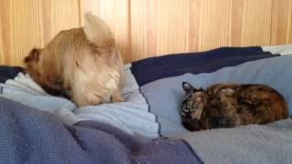 ノーフォークテリアのアルとさび猫のさびです。