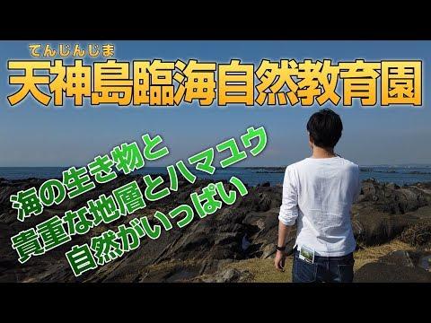 【Shin旅】天神島臨海自然教育園(神奈川県横須賀市)に行ってきました!